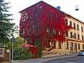 Begrünte Fassaden in der Falkstraße (Herbstansicht) - panoramio.jpg