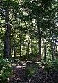 Ben Eoin Provincial Park Hemlock Grove.JPG