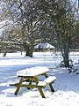 Bench at Newlands Corner - geograph.org.uk - 1149097.jpg