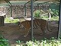 Bengala Zoo Maracay.jpg