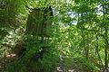 Beobachtungssitz Hohe Egge (Süntel) IMG 2776.jpg