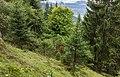 Bergtocht van Churwalden Mittelberg (1500 meter) via Ranculier en Praden naar Tschiertschen 009.jpg