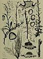 Berichte der Deutschen Botanische Gesellschaft (1892) (20340160896).jpg