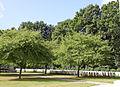 Berks Cemetery Extension 5 1.JPG