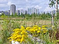 Berlin - Gropiusstadtblick (Prospect of Gropius City) - geo.hlipp.de - 40628.jpg