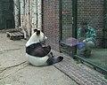 Berliner Zoo Bao-Bao 2.JPG