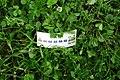 Bilet na Maltankę znaleziony w trawie (1).jpg
