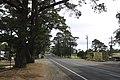 Bilpin NSW 2758, Australia - panoramio (3).jpg