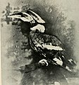 Bird notes (1902) (14775183453).jpg