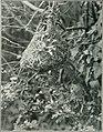 Bird notes (1923) (14568589250).jpg