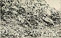 Birds of village and field- a bird book for beginners (1898) (14568680308).jpg