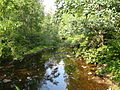Black Moshannon Creek 2.jpg
