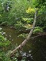 Bloomfield Provincial Park IMG 8218 (1848206883).jpg