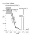 Blue Whale Population v1.png