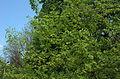 BotGardenFomin DSC 0176-1.jpg
