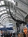 Brachiosaurus altithorax airport3.jpg