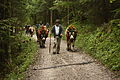 Brecherspitz, cows going down, Bavaria, Germany, Sept 2012.JPG
