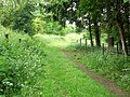 Bridleway near Ashmore - geograph.org.uk - 1347577.jpg