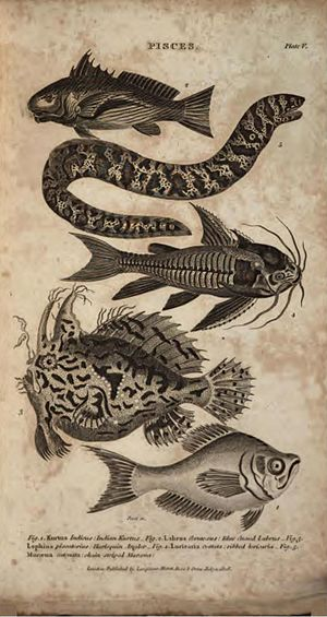 British Encyclopaedia - Image: British Encyclopaedia, 1809 Vol 4, Plate V on Pisces