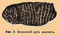 Brockhaus and Efron Encyclopedic Dictionary b36 521-2.jpg
