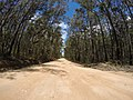 Brooman NSW 2538, Australia - panoramio (116).jpg