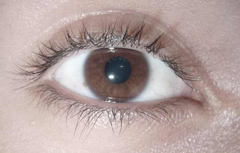 File:Brown eye.jpg