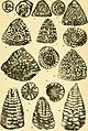 Bulletins of American paleontology (1955-1956) (19882149203).jpg