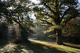 Burnham Beeches - geograph.org.uk - 94828.jpg