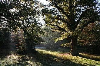Farnham Royal - Image: Burnham Beeches geograph.org.uk 94828