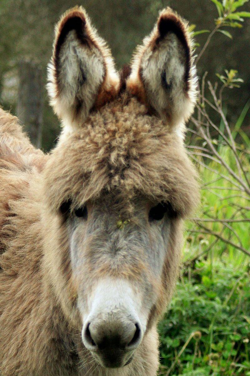 Wikijunior Baby Animals The Little Donkey Wikibooks