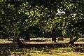 Bushy Park - panoramio - Alexey Komarov.jpg