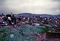 Cơn bão 1971 (9677353071).jpg