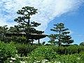 CBG Japanese Garden 1.JPG