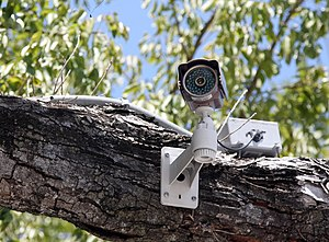 A closed-circuit television camera in a tree, ...