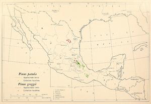 Pinus patula - 1966 range map for Pinus patula and Pinus greggii