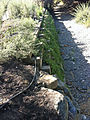 Calabazas Creek Timber Crib with Native Plants Sept 2011.jpg