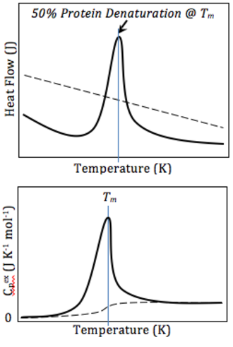 Differential scanning calorimetry - Top: A schematic DSC curve of amount of energy input (y) required to maintain each temperature (x), scanned across a range of temperatures. Bottom: Normalized curves setting the initial heat capacity as the reference. Buffer-buffer baseline (dashed) and protein-buffer variance (solid).