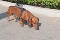 Caminata por los perros y animales Maracaibo 2012 (34).jpg