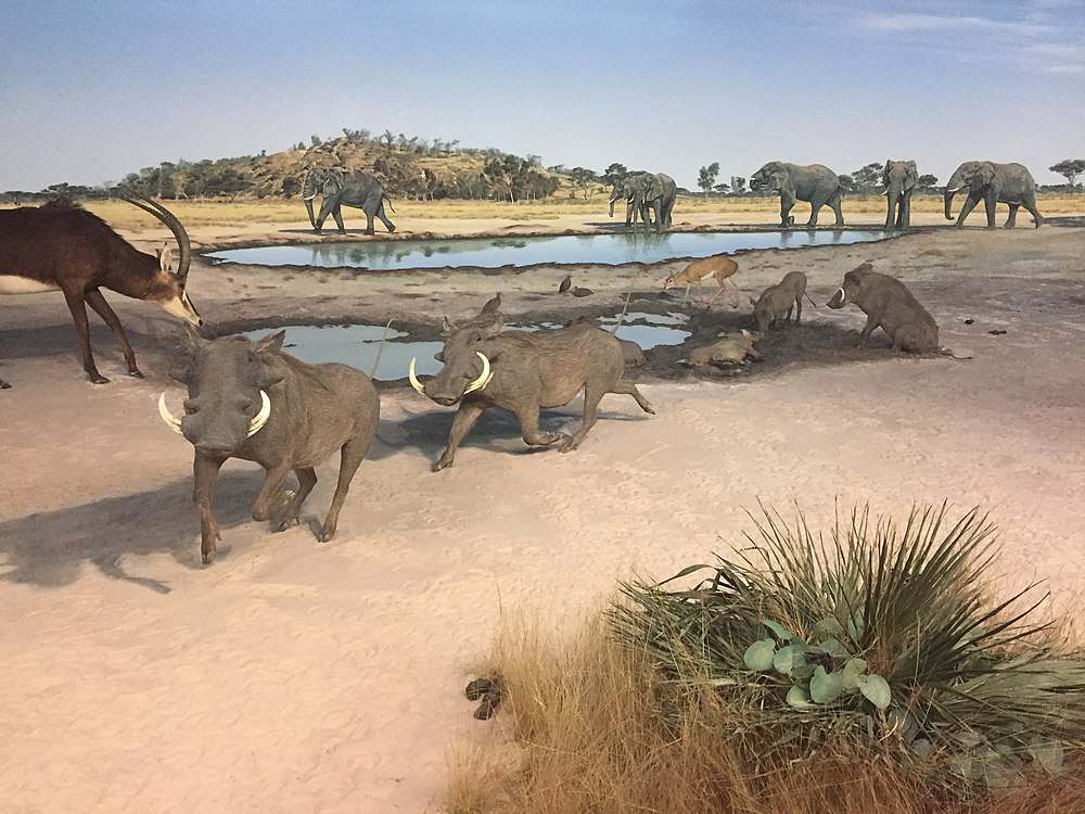 The average litter size of a Desert warthog is 3