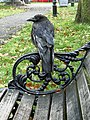 Carrion crow in Clapham Common (8112412376).jpg