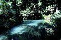 Caserta jardín inglés. 02.JPG