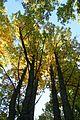 Castañar de El Tiemblo (30 de octubre de 2016, Reserva natural del Valle de Iruelas, El Tiemblo) 07.jpg