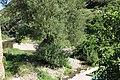 Castanet-le-Bas ruisseau Salles - Mare.jpg