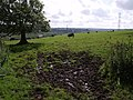 Cattle at Savath - geograph.org.uk - 474709.jpg