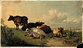 Cattle resting in open landscape. Colour reproduction of a p Wellcome V0021726.jpg