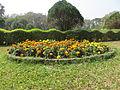 Central Park Kolkata marigolds.JPG