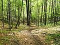 Cesta na Strážov od Čičman - panoramio.jpg