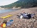 Charton Bay, Humble Pt - geograph.org.uk - 697115.jpg