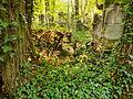 Chenstochov ------- Jewish Cemetery of Czestochowa ------- 88.JPG
