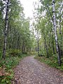 Chequamegon-Nicolet National Forest - Sept 2017.jpg